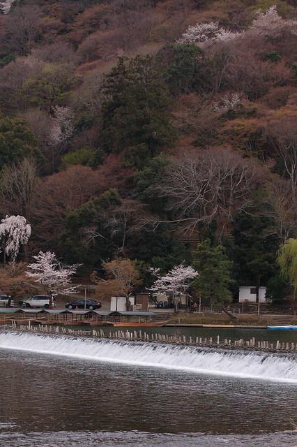 0829 - Arashiyama bosque bambú