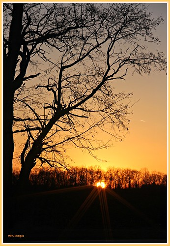 trees sunset orange sun nature wisconsin canon spring silhouettes sunsrays canoneos60d picmonkey picmonkey:app=editor merleearbeen meaimages