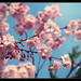 Berlin Sakura 1 by Mikedie1