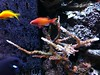 Aquarium Update - April 2013