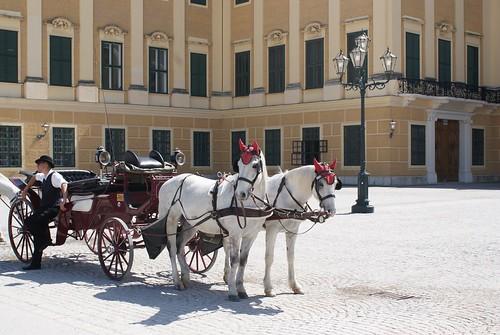 Schönbrunn Horses