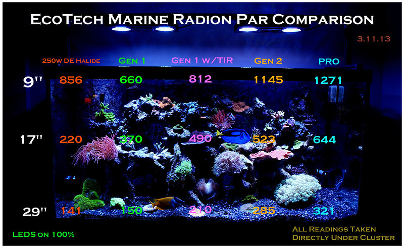 Radion Pro Bleaching Coral Reef Central Online Community