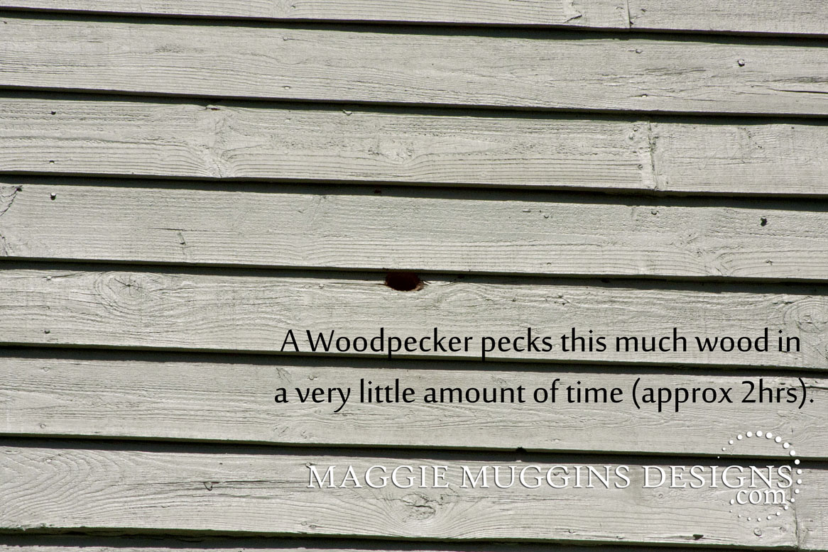 Woodpecker Attack House Siding