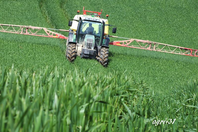 fongicide sur blé