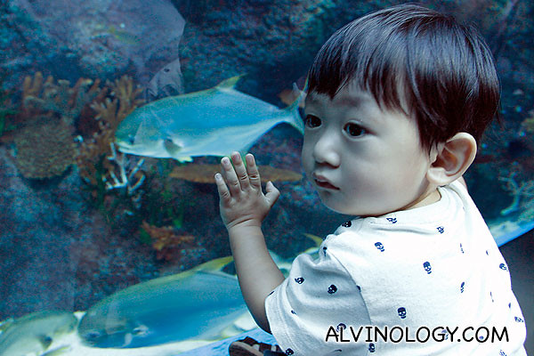 Asher checking out the fishes