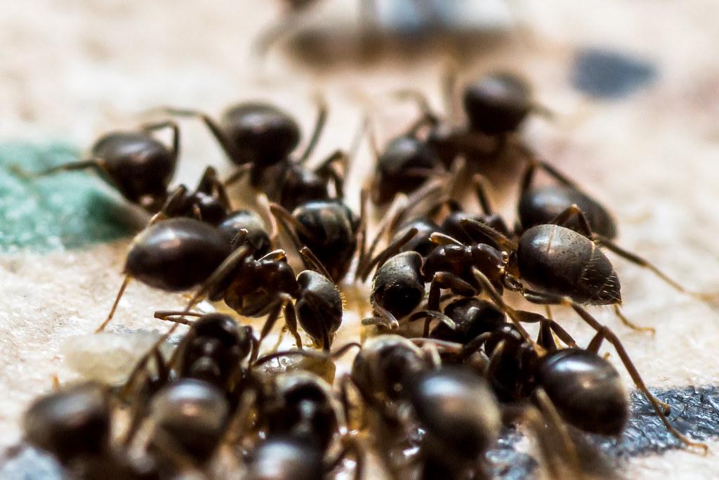 25 - May - 2013:  Ants