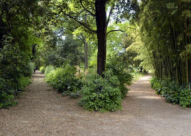 Jardin des plantes montpellier france flickr photo - Jardin des plantes de montpellier ...