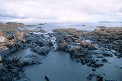 2002年聲望號油輪船難,油污滿佈西班牙海域與海岸。照片來源:WWF。Raúl GARCÍA攝。