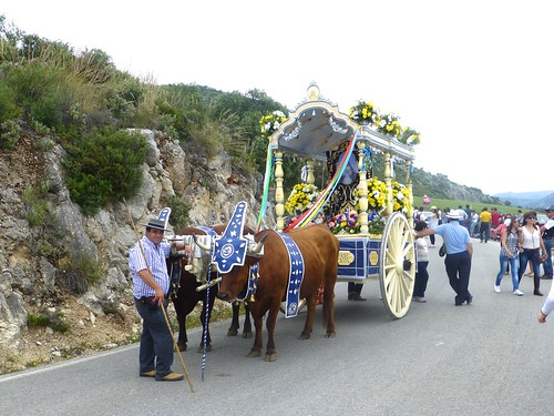 Romeria in Pruna: oxen drawing decorated cart