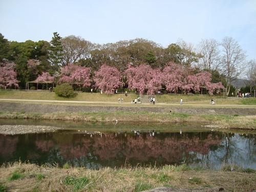 2013/04 賀茂川
