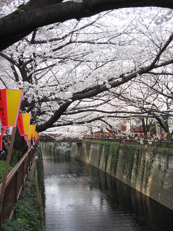 Meguro River 目黒川