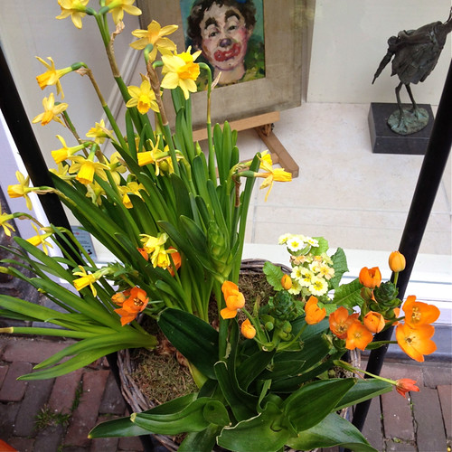 Haarlem - flower pot
