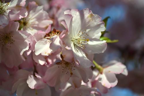 Cavenago di Brianza - Primavera