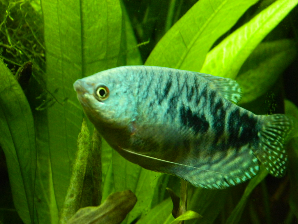 Welcome to the jungle page 4 tropical fish forums for Jans tropical fish