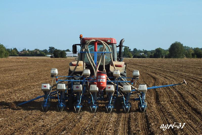 rapeseed seeding