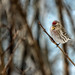 Angry Birds @ Algonquin Provincial Park, Ontario by B.E.K. Photography