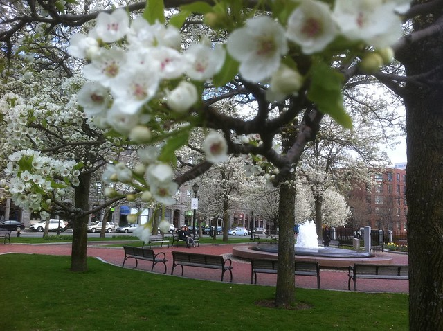 Boston - Columbus Park - The Trees in the Spring