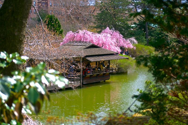 BBG Sakura Matsuri 2013 by BklynBorn - 19