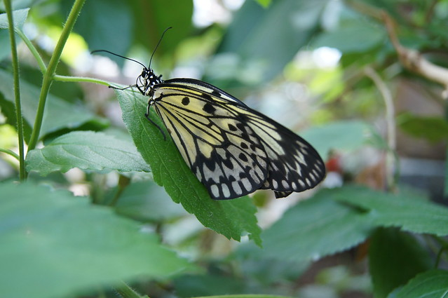 The Victoria Butterfly Garden Flickr Photo Sharing