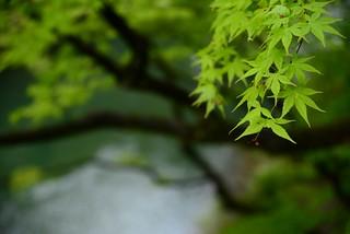 鶴仙渓@加賀・山中温泉。