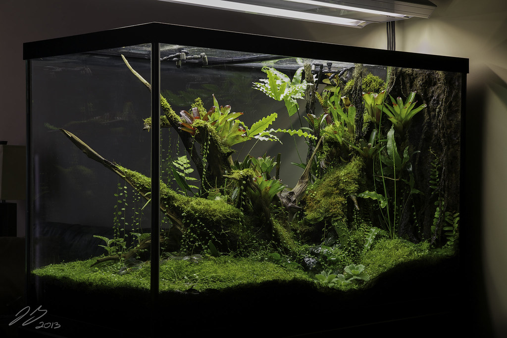 10 Gallon Vivarium | www.imgkid.com - The Image Kid Has It! 10 Gallon Vivarium