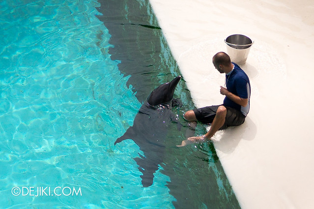 Marine Life Park Singapore - Adventure Cove Waterpark - Dolphin and Trainer