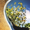 Sunflower Reflection...I love my friend's backyard!!!