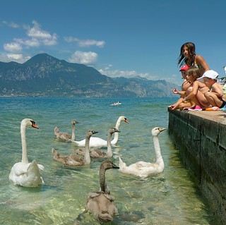 Children love feeding swans at Lake Garda