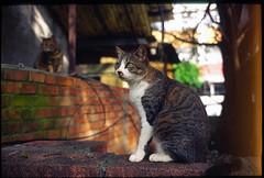 Leica life #4