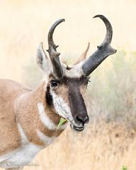 Antelope Island Aug 2016