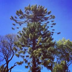 #Primavera #arbol #arboles #tree #trees
