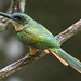 Small photo of Jacamar
