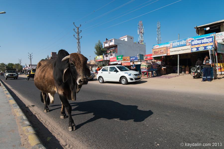 Биканер. Индия, дорога в пустыню