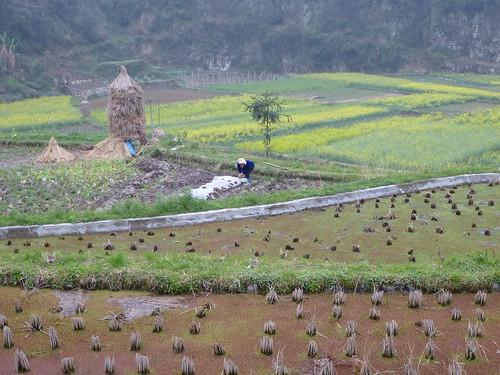Guizhou13-Kaili-Langde (13)