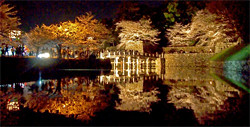 Hikone Castle Illumination