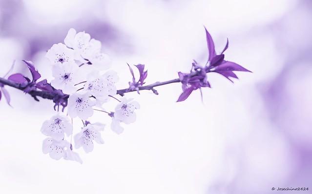 En primavera