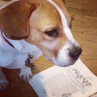 "Photo of a dog standing on top of a magazine, opened up to a page that says ""Prince and the revolution"" with smaller illegible text below."