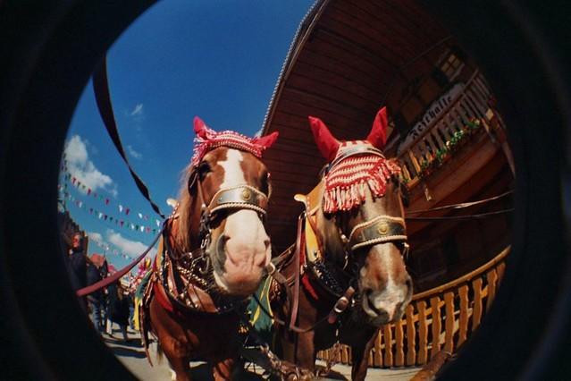 Bier Pferde - Beer Horses