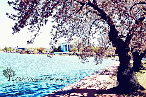 Cherry Blossom Festival by M K Yeager