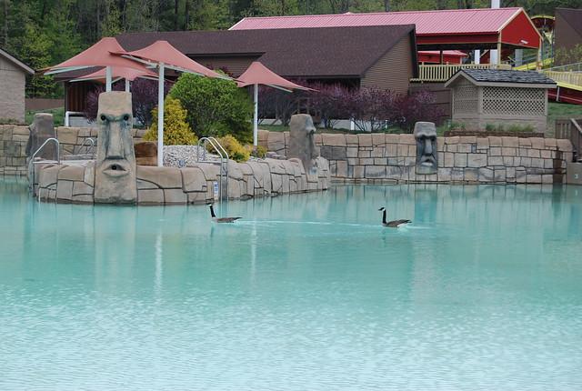 Canada geese in Bahari