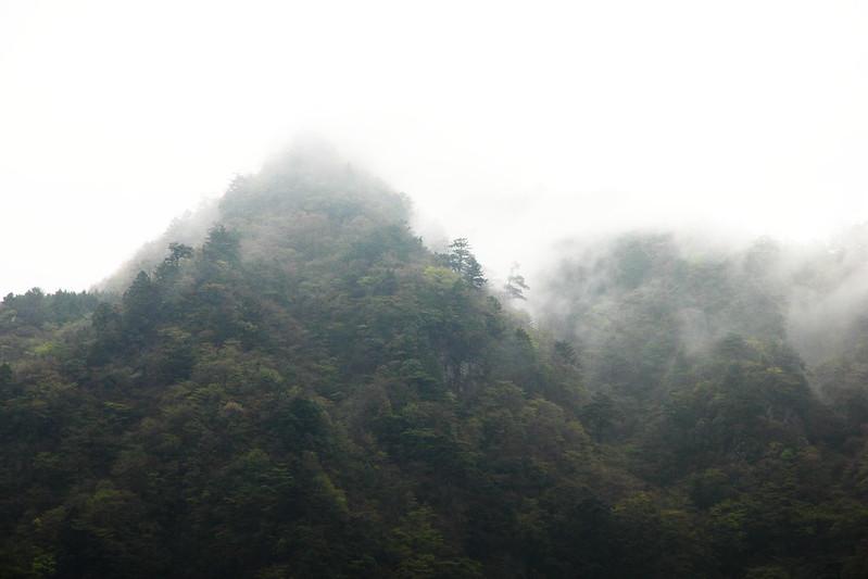 IMG_6946_4-24 Tsubayama Wandering
