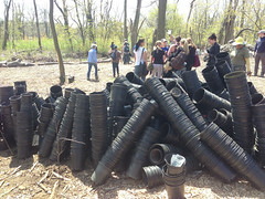 All 6000 trees planted in Pelham Bay Park in the Bronx for Million Trees NYC