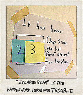 "It has been 23 days since the last ""Bear"" escaped from the zoo"