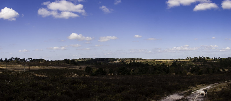 Canford Heath Panorama 4