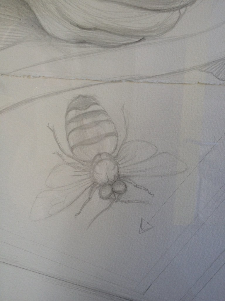 bee Amanda Lebus, Mapping the Waters 2003 pencil on paper New Hall