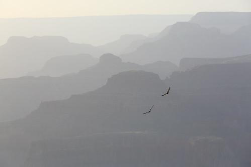 Grand Canyon (Yavapai Point)