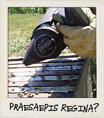 Praesaepis Regina