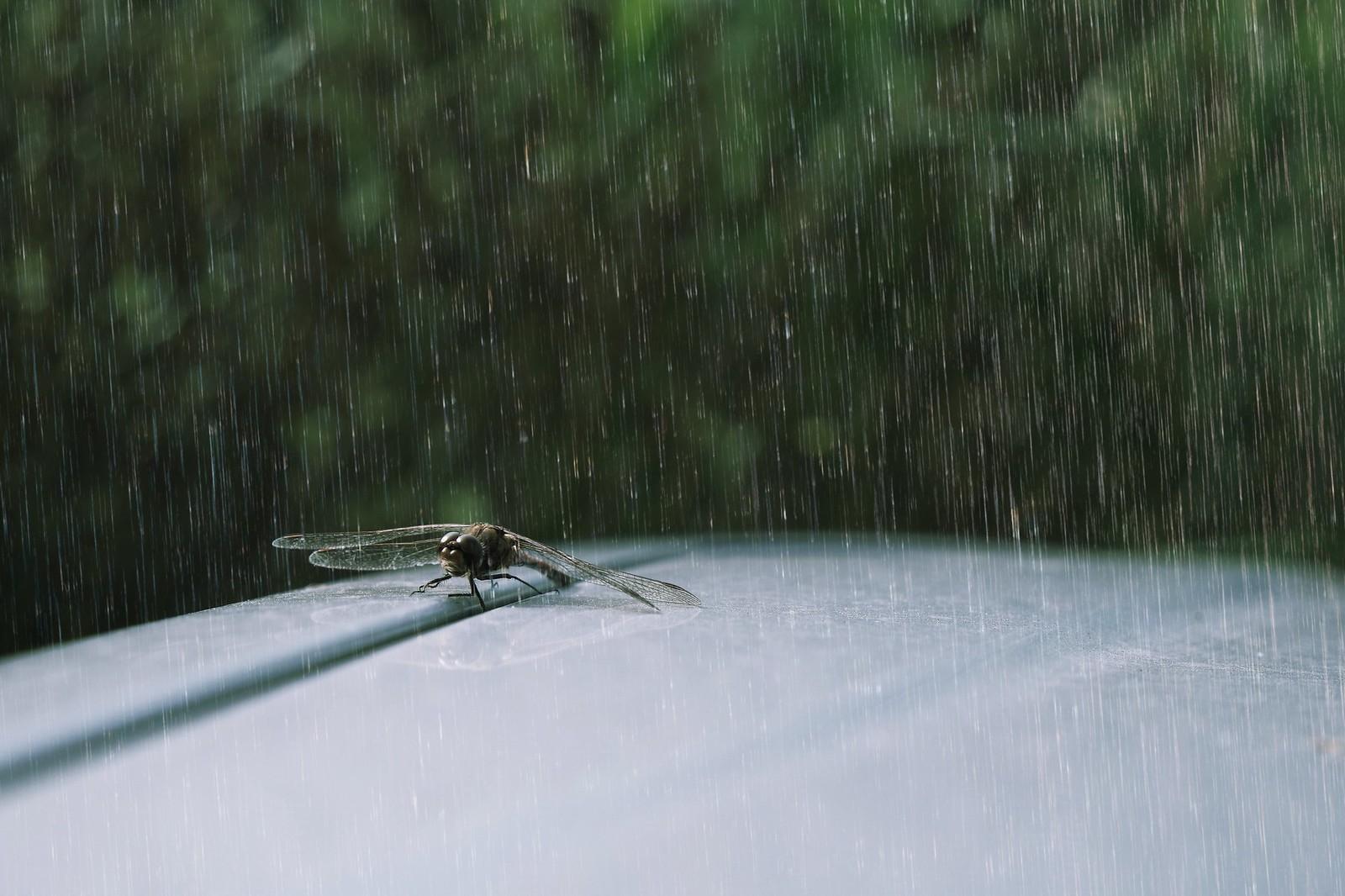 Libelle steht im Regen