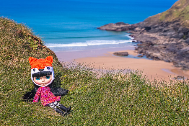 Bella the travelling fox finds a nice spot to stop for a rest