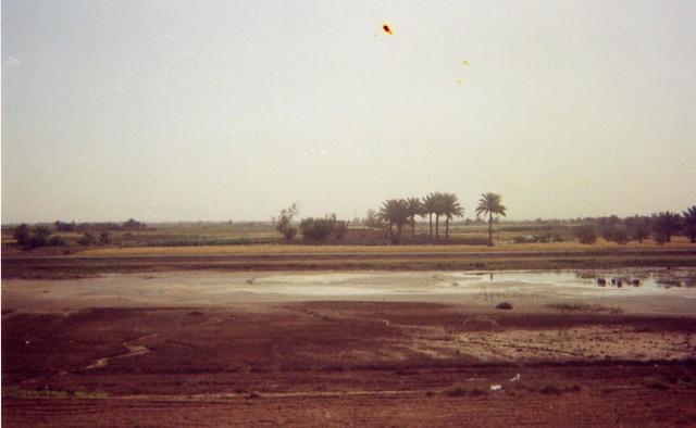 Iraqi Pond